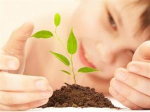 paciencia, reforestacion, planta