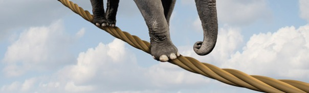 desafios, liderazgo, elefante, cuerda