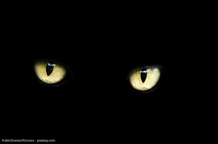 PublicDomainPictures_eyes-218185_1280_pixabay_kleiner
