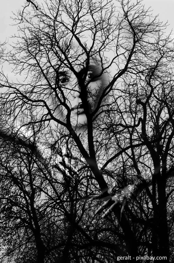 geralt_forest-552868_1920_pixabay_kleiner