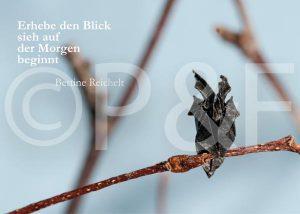 Eule_mit TextBR-Seite001