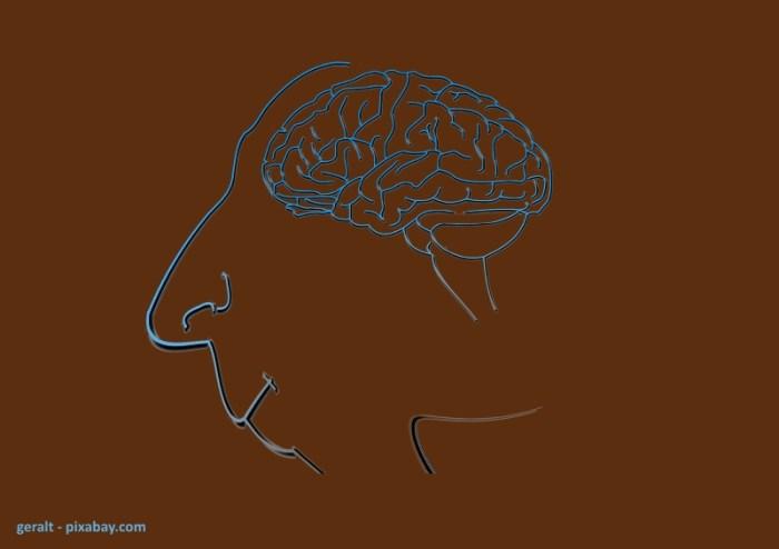 geralt_brain-535780_1920_pixabay_kleiner