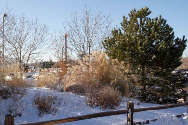 Зима в Денвере