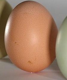 Equinox Egg Balancing
