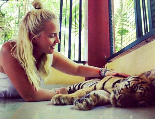 Tiger Tourism in Chiang Mai, Thailand