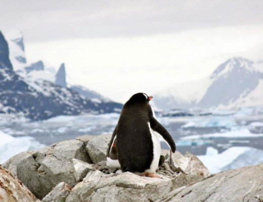 The Penguins of Antarctica! www.sevencontinentssasha.com