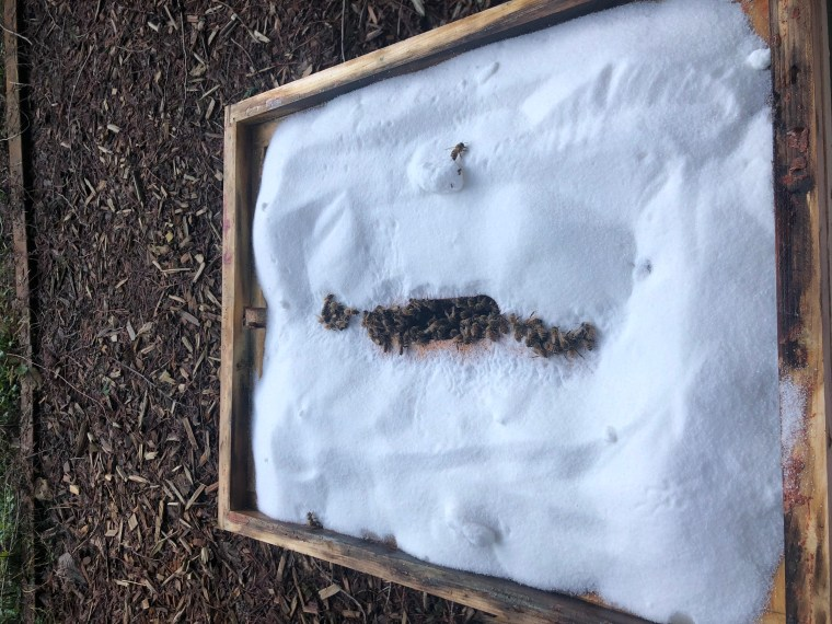 Winter feed for honey bees