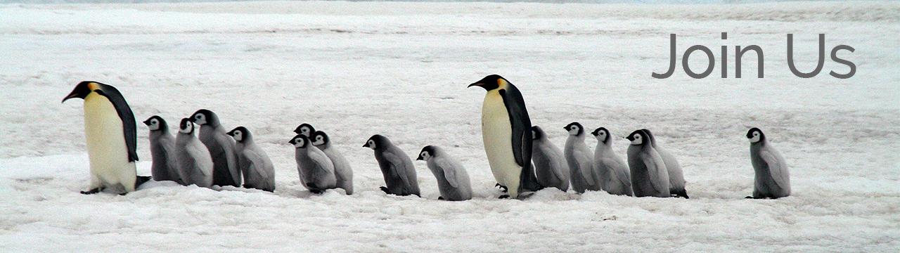 antarctica penguins for partner banner