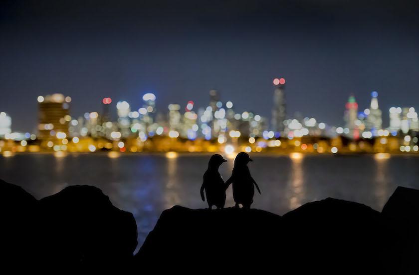 Doug Gimsey - Little Penguin