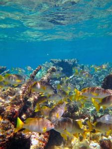fish and coral in cuba