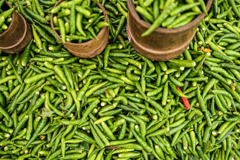 chili peppers in bali