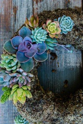 20160418_SucculentsAreForSharing@JonesPhotographyCompany-109