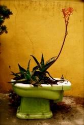 Flowering toilet, Valparaiso, Chile.