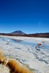 Laguna Hediona, Bolivia