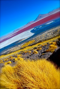 Laguna Colorada, slightly psychedelic version! The lake is turned red by the natural pigments of the algae.