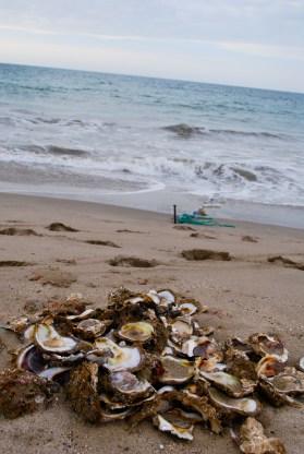 Oyster shells, Zorritos, Peru