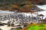 Penguin colony, Parque Ahuenco, Chiloé