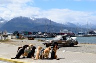 Walkies! Ushuaia