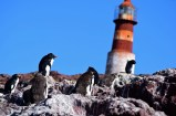 Rockhoppers, Penguin Island