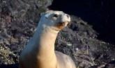 Sea lion colony en route to Penguin Island, Puerto Deseado, Patagonia, Argentina.
