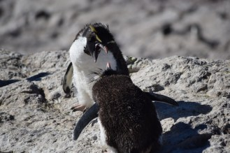 Rockhopper stand-off