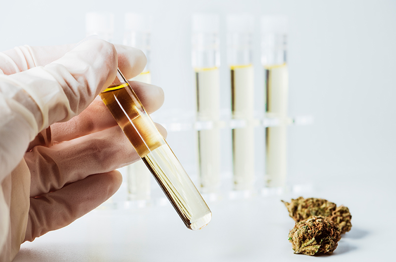 CBD Extractions Seventips