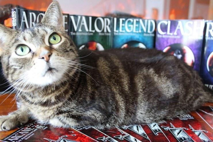 cat_all_five.jpg