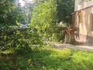 деревво