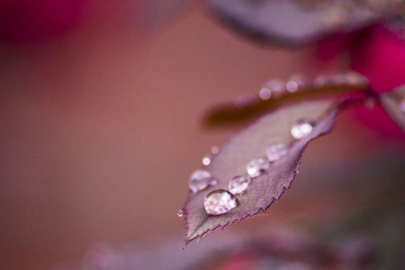severelymagicalthings.com/magic-rain-drops/