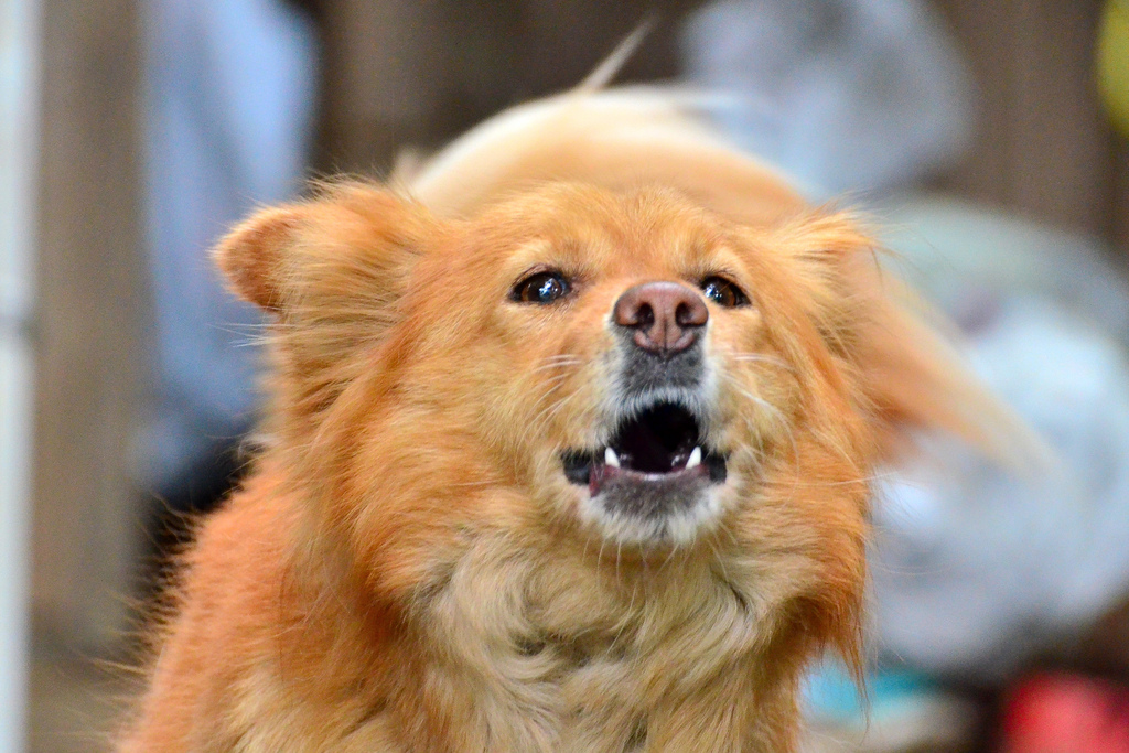 Köpekler Neden Hırlar? http://sevgilikopegim.com/2014/11/16/kopekler-neden-hirlar/