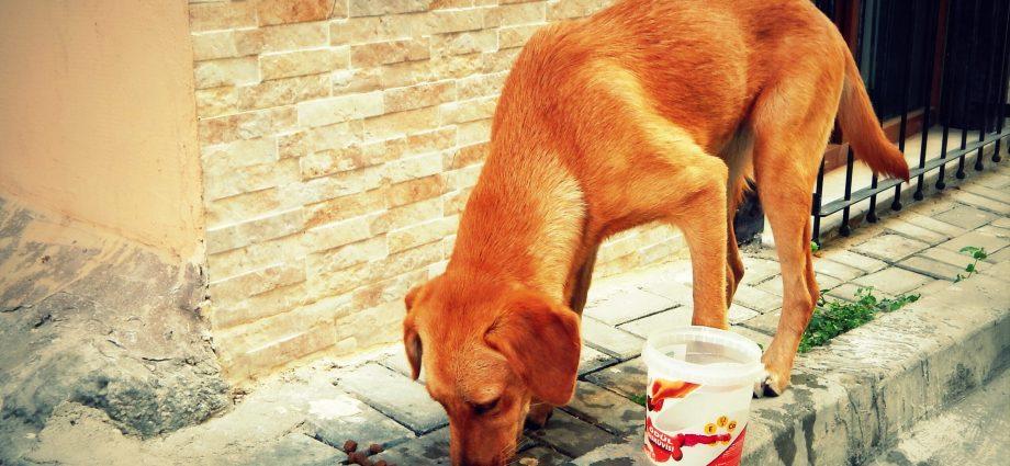 Sokak Hayvanı Tanımlamasının Toplumsal Sorumluluk Altındaki Hayvanlar Olarak Değiştirilmesi İçin İmzala! http://sevgilikopegim.com/2015/02/12/sokak-hayvani-degil-toplumsal-sorumluluk-altindaki-hayvanlar/