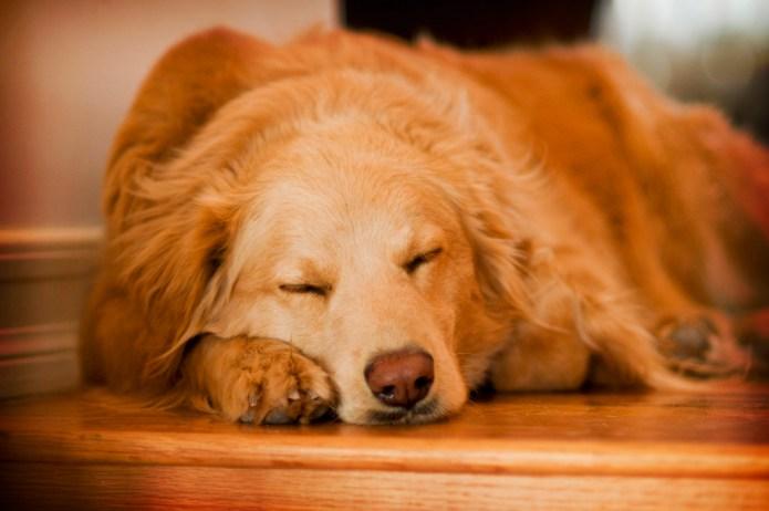 Yalnızlık Endişesi ve Strese Karşı Terapi Müzikleri Köpeğiniz yalnızlık endişesi yaşıyorsa,strese giriyorsa işte sizin için seçtiğim terapi müzikleri. İster ücretsiz müzikleri internetten dinleyin, isterseniz en iyi müzik terapi albümlerini satın alın. http://sevgilikopegim.com/2015/02/02/yalnizlik-endisesi-ve-strese-karsi-terapi-muzikleri-ucretsiz/