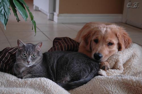 Kedi ve Köpeklerde Mama Değiştirirken 4 Pati KuralınıUnutmayın! http://sevgilikopegim.com/2015/06/23/kedi-ve-kopeklerde-mama-degistirirken-dikkat-edilmesi-gereken-4-pati-kurali/