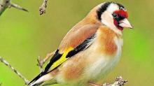 La intervención de las aves se ha llevado a cabo el pasado fin de semana