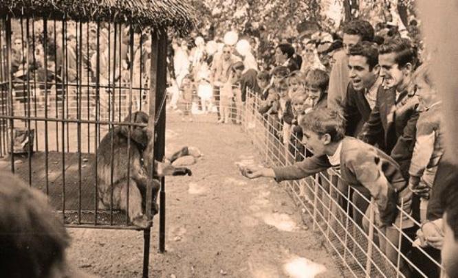 parque de maria luisa zoo