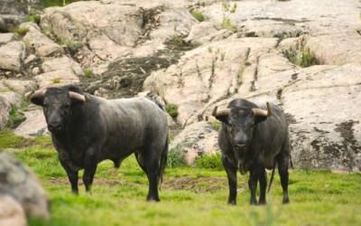 La Unión de Criadores de Toros de Lidia abre las puertas a otras ganaderías