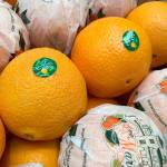 Why Ave Maria oranges are so famous