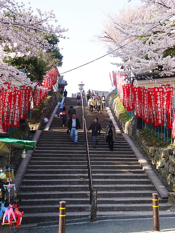 Nara ainda mais bonita na primavera do Japão