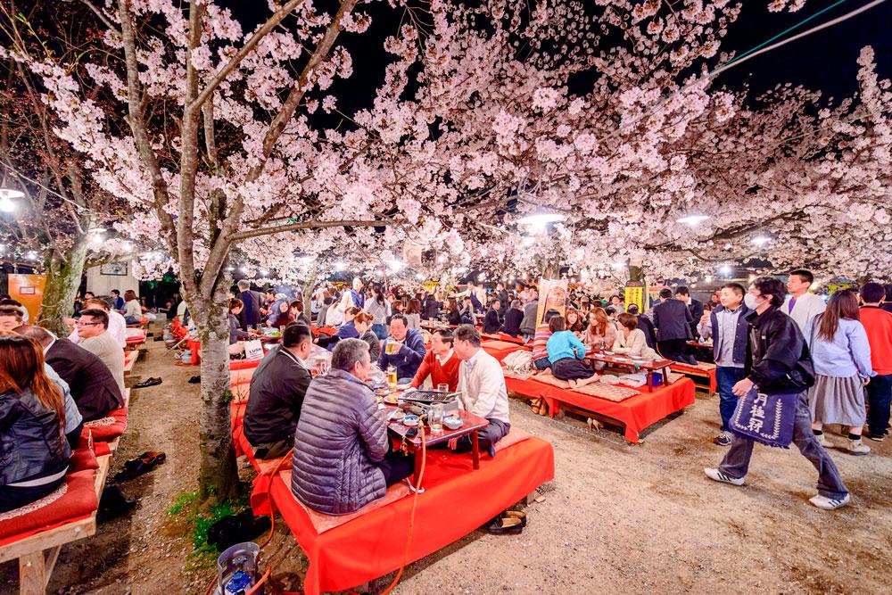 flores de cerejeira em Maruyama Park - Kyoto