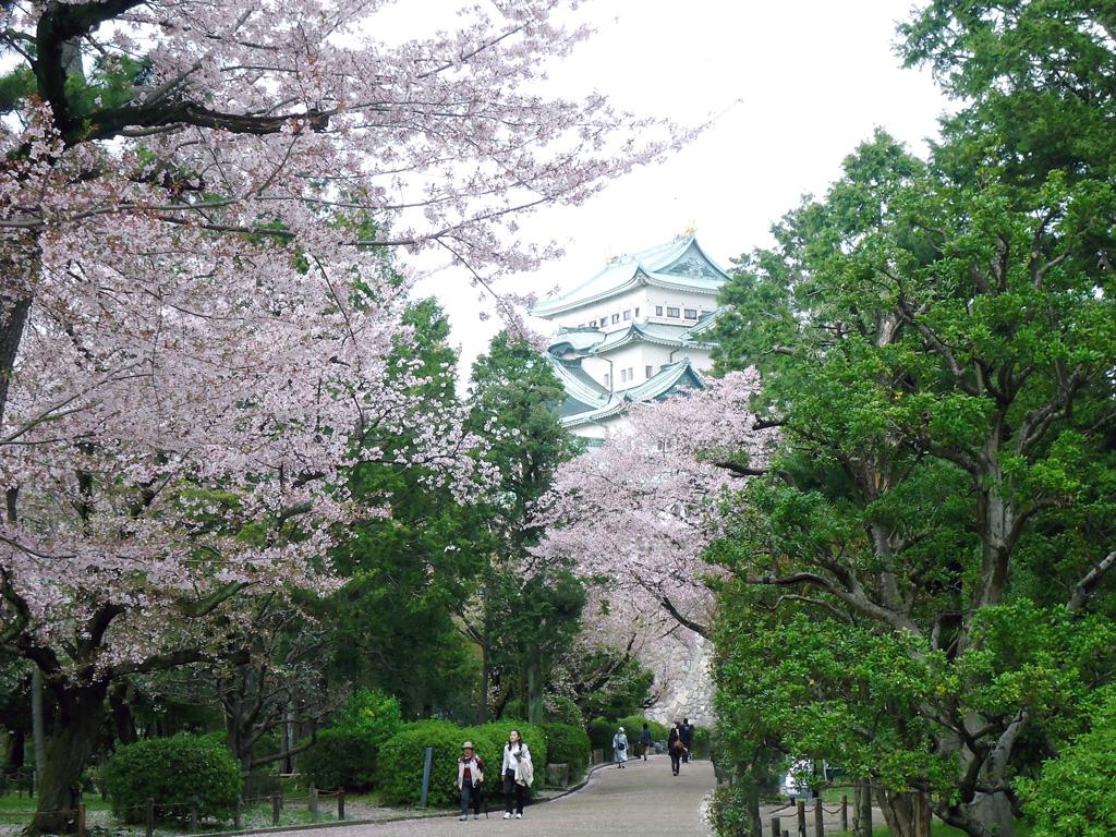 Castelo de Nagoya cheio de flores de cerejeira