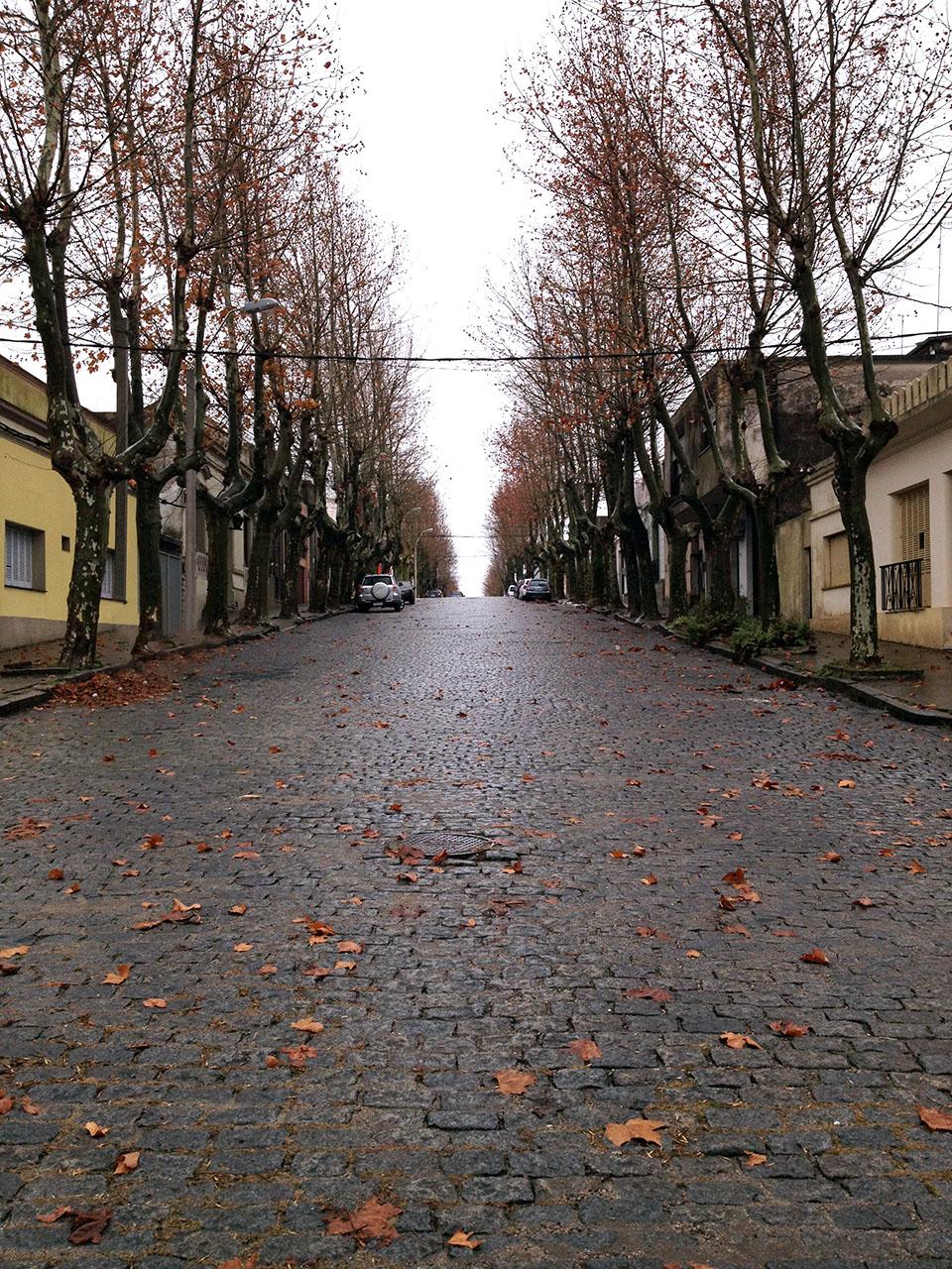 Ruas arborizadas em colonia