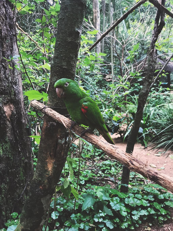 Papagaio-posando-para-a-camera