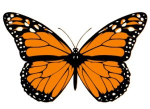 Attitude is everything. Butterflies are a Feast for the Eyes.