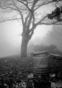 Dale Panton, photography