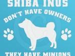 Funny Shiba Inu stickers