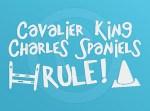 Agility Cavalier King Charles Spaniel Sticker