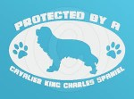 Protected by a Cavalier King Charles Spaniel Decal