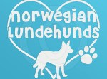 I Love Norwegian Lundehunds Decals