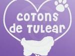 I Love Cotons de Tulear Stickers
