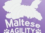 Maltese Agility Decals